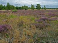 Göbelner Heide